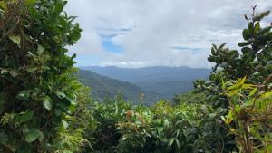 Hiking in a Fairytale | Monteverde's Cloud Forest in Costa Rica | Broke Girl Abroad